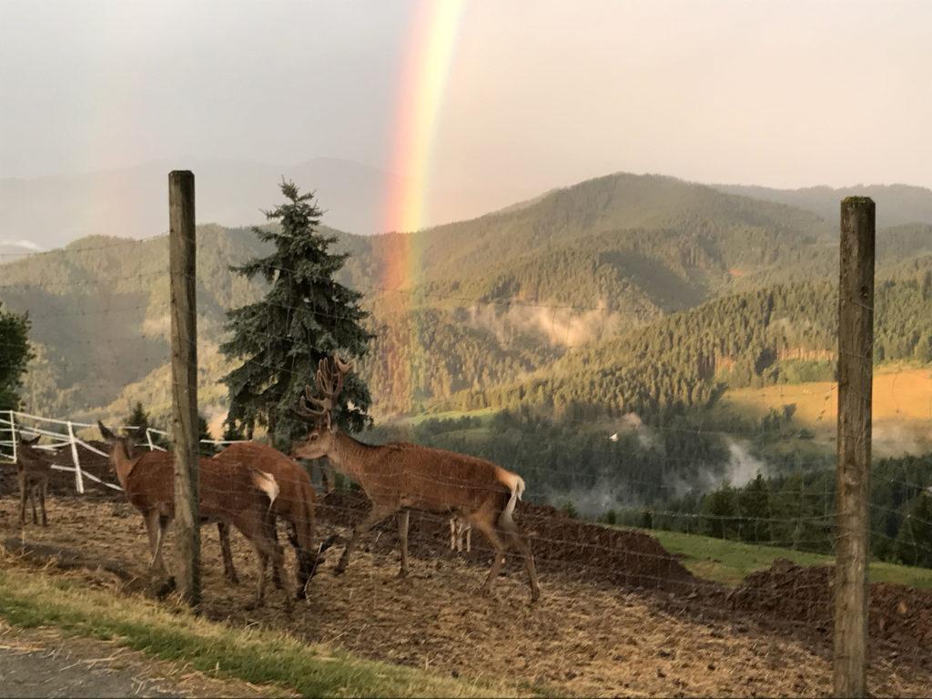 Das Rotwild-Gehege am Magdalensberg in Kärnten.